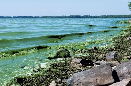 Algal blooms are increasing in frequency and in severity, experts believe