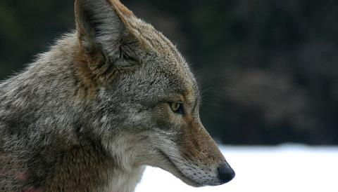 Sierra Wildlife Rescue