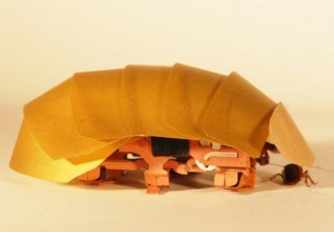 Cockroaches are an ideal model for a search-and-rescue robot