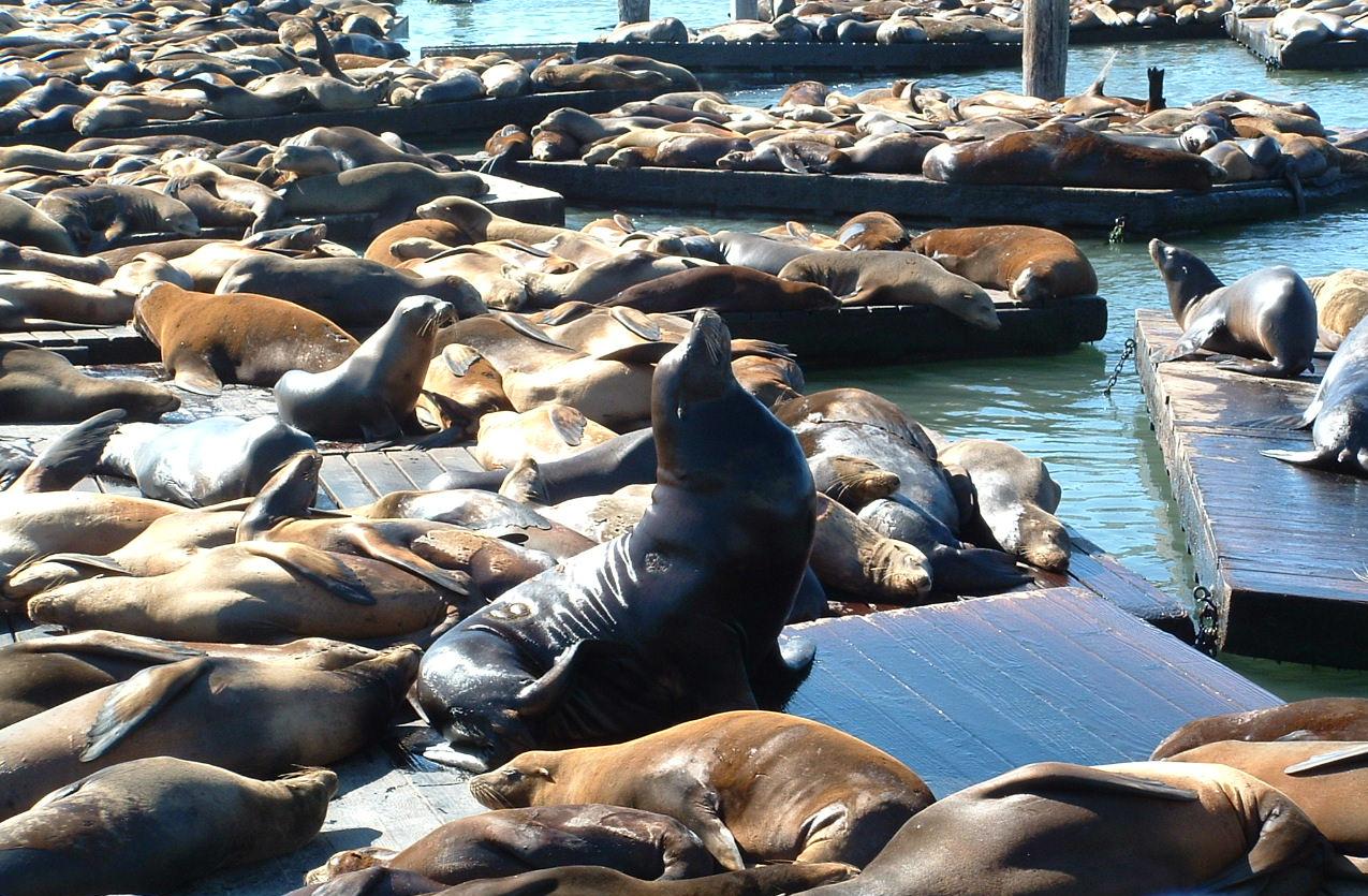 California's Sea Lions
