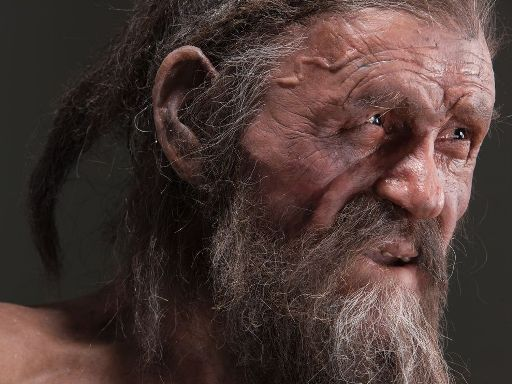 Otzi's stomach analysis unveils new information about ancient human migration
