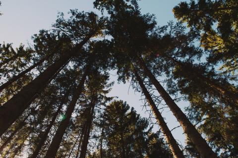 ara chackerian forest