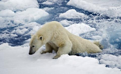 Global warming being caused by human activities: climate change experts say